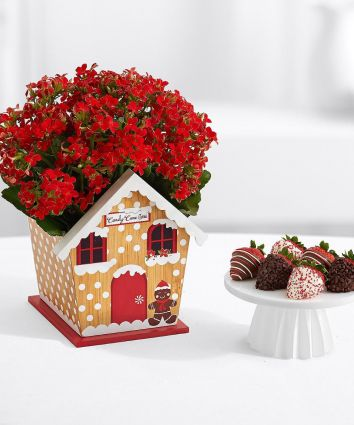 Festive Gingerbread House with 6 Christmas Strawberries